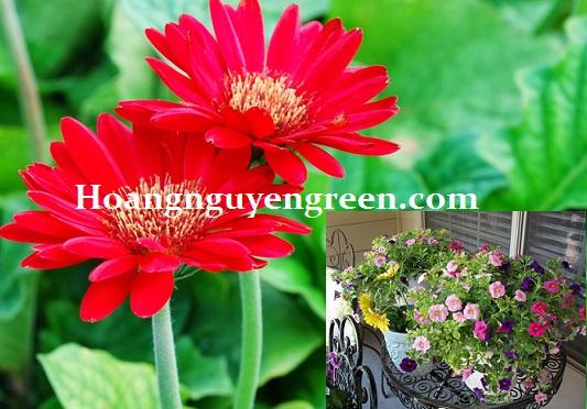 Vườn trên sân thượng