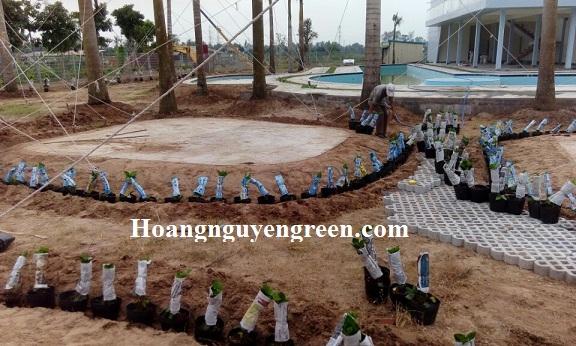 kỹ thuật trồng cây